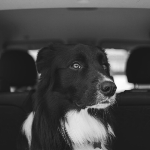 Driving_W_Animals_Blog